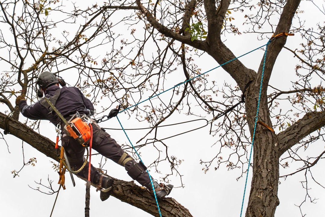 Arborist Rigging Rope Care: How to Properly Protect & Inspect Your Tree Climbing Rope